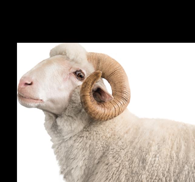 Course Hero Livestock